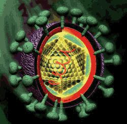An illustration of Hepatitis C