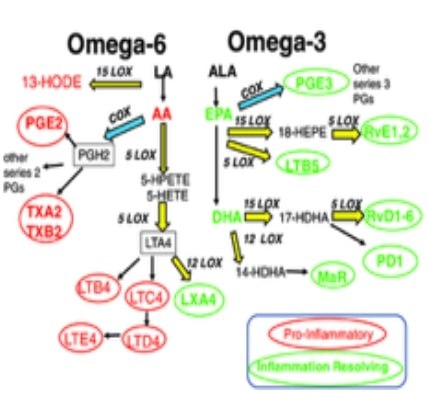 An illustration of omega-6 and omega-3